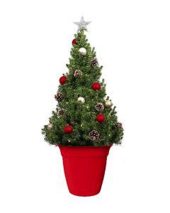 The LIVE Christmas Tree